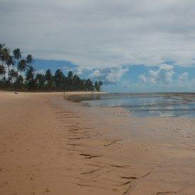 Praia do Forte: las piscinas naturales y el Proyecto Tamar